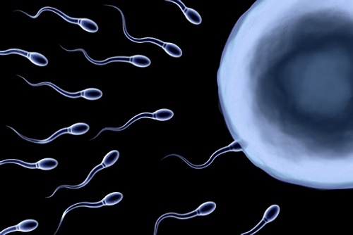 Сперматозоиды в слюне только